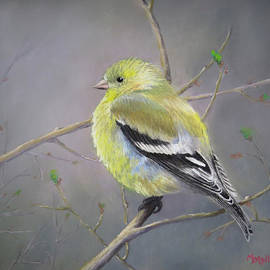 Marcus Moller - Spring Goldfinch
