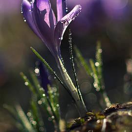 Jaroslaw Blaminsky - Spring Impression II