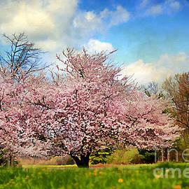 Darren Fisher - Spring in Kentucky