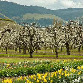 Nick  Boren - Spring In The Hood River Valley