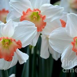 Kathleen Struckle - Spring Jonquils