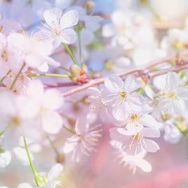 Jenny Rainbow - Spring Lightness