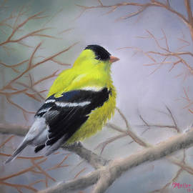 Marcus Moller - Spring Male Goldfinch