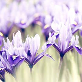 Rebecca Cozart - Spring March