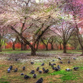 Joann Vitali - Spring on Boston Common