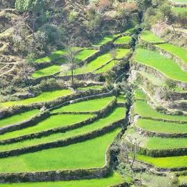Kim Bemis - Spring Planting - Himalayas India