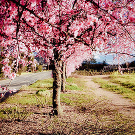 Aron Kearney Fine Art Photography - Spring Time