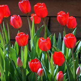 Kay Novy - Spring Time Beauties