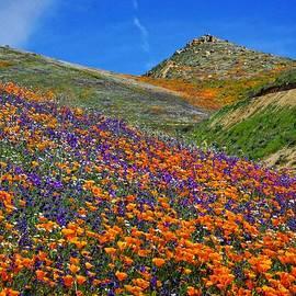 Lynn Bauer - Spring Wildflower Extravaganza