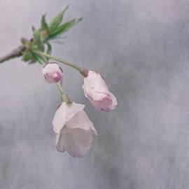 Kim Hojnacki - Spring