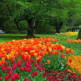 Dan Myers - Springtime At Longwood Gardens