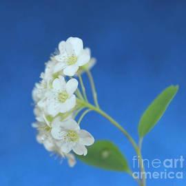 Krissy Katsimbras - Springtime Blossoms