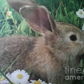 Blackwater Studio - Springtime Bunny