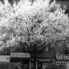 Miriam Danar - Springtime in New York - The Great Tree
