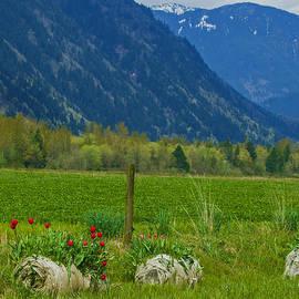Jordan Blackstone - Springtime in the Mountains