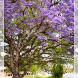 Lynn Bauer - Springtime Jacaranda Tree