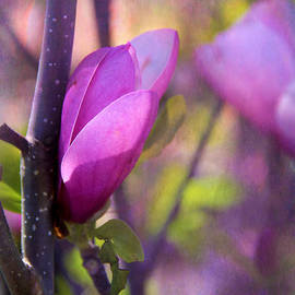 Judi Bagwell - Springtime