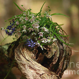 Luv Photography - Springtime Wild Flowers