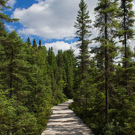 Barbara McMahon - Spruce Bog Boardwalk