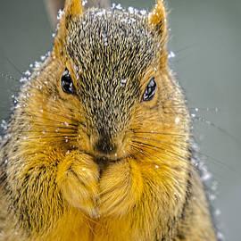LeeAnn McLaneGoetz McLaneGoetzStudioLLCcom - Squirrel Break