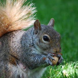 Squirrel Clutching a Peanut