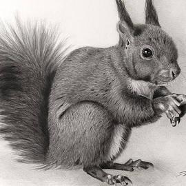 Giorgio  Smiroldo - Squirrel