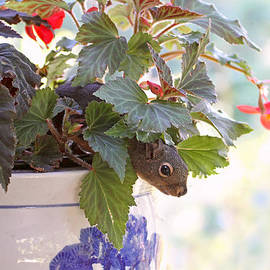 Peggy Collins - Squirrel in a Flower Pot