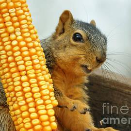 Lori Tordsen - Squirrel