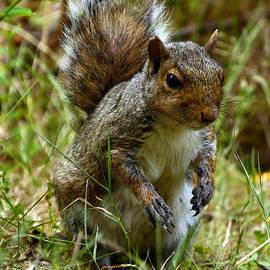 Norng Ti  - Squirrel