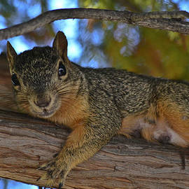 Allen Sheffield - Squirrel on Watch