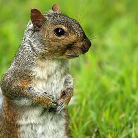 Karol  Livote - Squirrel Pose