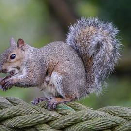 Sharon Bennett - Squirrel