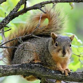 Rosanne Jordan - Squirrel