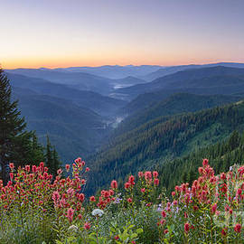 Idaho Scenic Images Linda Lantzy - St. Joe Wildflowers