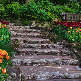 Jenny Rainbow - Stairs with Tulips. Keukenhof Garden. Netherlands