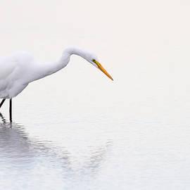 Karol  Livote - Stalking Egret