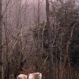 Patricia Keller - Stallion in The Mountain Pasture