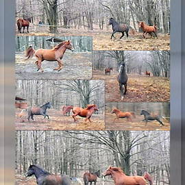 Patricia Keller - Stallions Enjoy Some Horsing Around