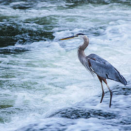 Lowell Monke - Standing Blue Heron