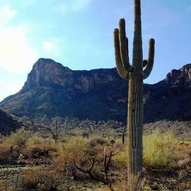 Glenn McCarthy Art and Photography - Standing Tall - Saguaro