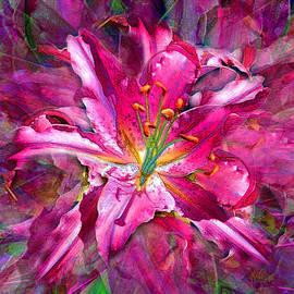 Michele  Avanti - Star Gazing Stargazer Lily