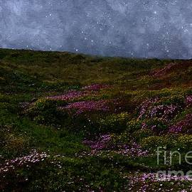 RC deWinter - Star-Misted Meadow