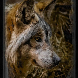 Ernie Echols - Stare of the Wolf
