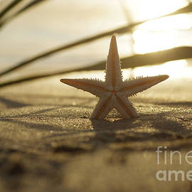 Tanja Riedel - Starfish in the evening light nature still life