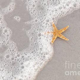 Diane Macdonald - Starfish in the Surf