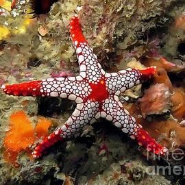 Sergey Lukashin - Starfish - Necklace