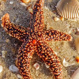 Zina Stromberg - Starfish