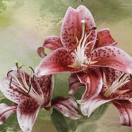 Diane Schuster - Stargazer Lilies