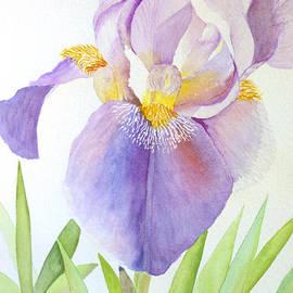 Anne Dean - Stately Iris