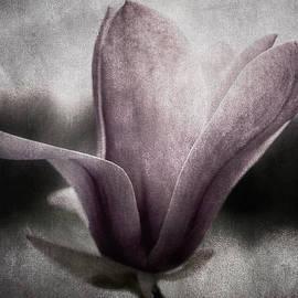 Darlene Kwiatkowski - Steel Magnolia